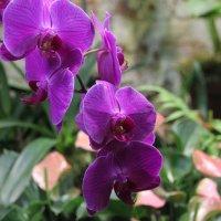 Орхидеи :: Татьяна Латышева
