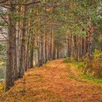 В любимом лесу :: Александр Лебедев