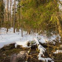 Дыхание весны :: Валентин Котляров