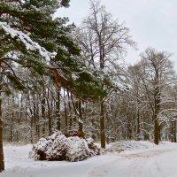 зимний лес :: Елена