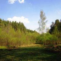 Наступившая весна :: Андрей Снегерёв