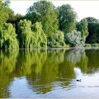 У озера. :: Валерия Комова