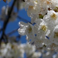 Весна! Весна на улице...!!! :: СветЛана D