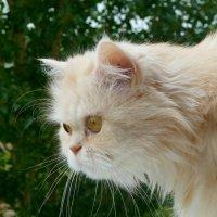 Всех наших любимых кошек с праздником! :: Чария Зоя