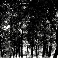 Солнце в парке :: Николай Филоненко