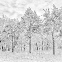 Зима :: Евгений Никифоров