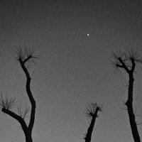 Деревья в центре города. :: Беспечный Ездок