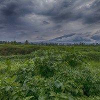 луг,горы,облака :: Александр