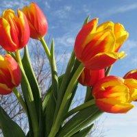 Весенние цветы :: Вера Андреева