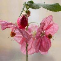 Весна на окне :: Елена Ахромеева