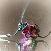 Пепел розы :: Игорь