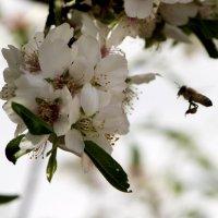 А у нас Весна :: Адик Гольдфарб