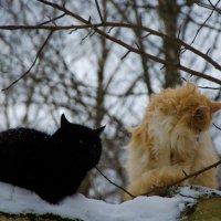 кот и кошка :: Даниил pri (DAROF@P) pri