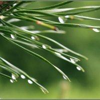 Эти летние дожди... :: Александр Хахалкин
