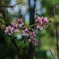весна :: Maria Vakorina