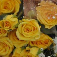 розы :: tankist prokat163