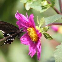 Бабочка и цветок :: maikl falkon