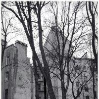 большие деревья :: sv.kaschuk