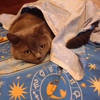 День Кошек! День Кошек! Знаю я вас, стоит на секунду уйти - приду, а любимая простыня - тю-тю! :: Galina194701