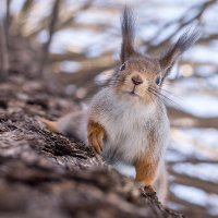 Чё смотришь? орехи давай!!! :: Alex Bush