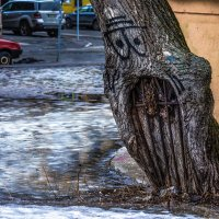 На улице Зверинской  есть озверевшие деревья... :: Николай