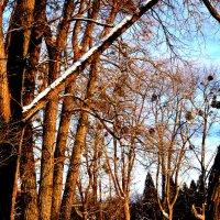 Зимний день :: Orest Zherebetskiy
