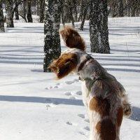 ... и только брызги снега....)) :: Валерия  Полещикова