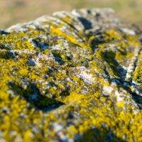 Мох на камне :: Максим Никитин