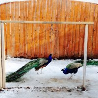 Птички из герба города Серпухова :: Svetlana27