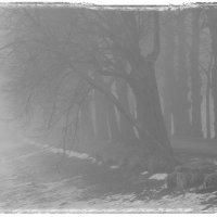 Туманное) :: Lesya Vi