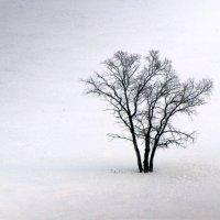 Вяз в степи :: Константин Филякин