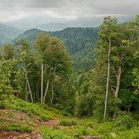Кавказ... :: Аnatoly Gaponenko