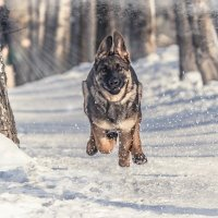 Зима чудесная пора :: Оксана Харламова