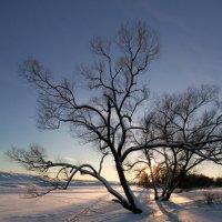 Дерево :: Антон Мазаев