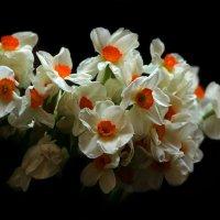 Весна :: Михаил Бибичков
