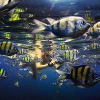 Fish :: Дмитрий Лаудин