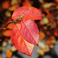 Осень :: Anita .