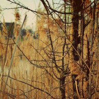 на озере :: Катерина Лячок