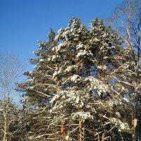 Мороз и солнце :: nika555nika Ирина