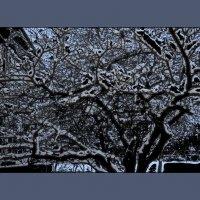 Зимний этюд №4 :: Валентина Данилова