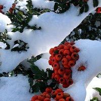 Метель снежком укутала... :: svetlanavoskresenskaia