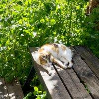 Уличная кошка :: Александр Деревяшкин