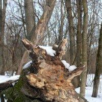 В лесу у тропинки мне встретился зверь... :: Елена Елена