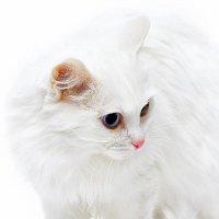 Облачный кот :: Александр Мясников
