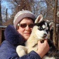 маленький хаски и я :: Валерия Шамсутдинова