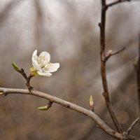 И всё-таки весна :: Ольга Мальцева