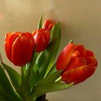 С праздником весны! :: Наиля