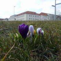 А в городе весна... :: Владимир Секерко