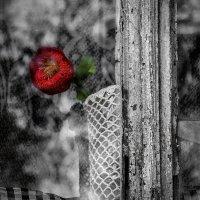 Одиночество :: Роман Холод