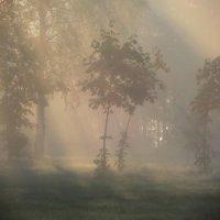 Про утренний свет.... :: Юрий Цыплятников